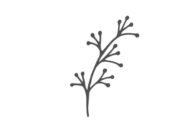 Olive et Érable